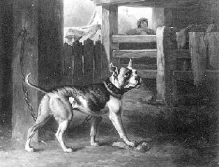 Original Bulldog chained in a barn